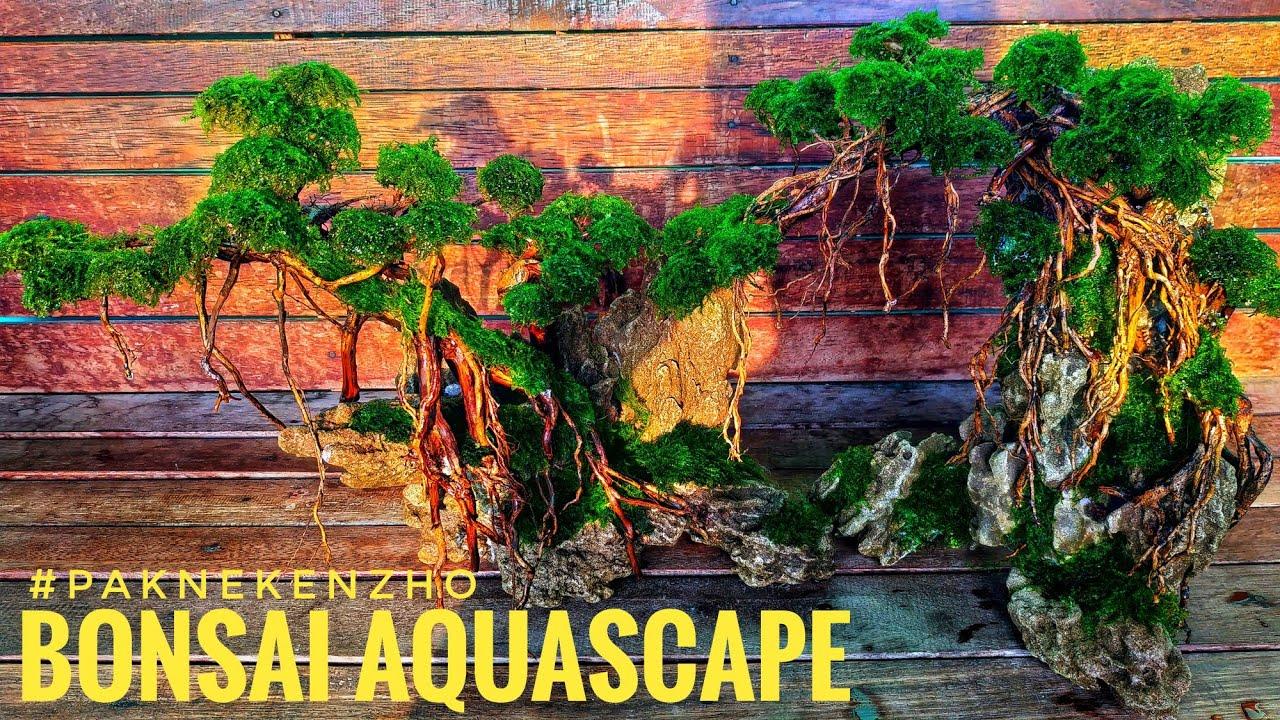 #56 Bonsai Aquascape ukuran 20cm - YouTube