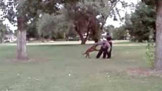Guy Gets Blown Up By Police K9
