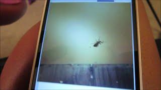 Vlog #483 Major Bug Panic & Maltese Tear Stains August 18, 2014