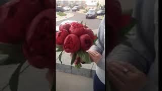 букет невесты из красных пионов.