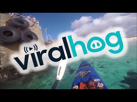 Kayaking with Sharks