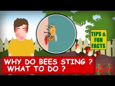 Why do Bees Sting ? What to do ? | Tips & Fun Facts 4K