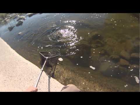 Riverwatch condominiums around 10 30 a m sept 11 doovi for Lake fishing near los angeles