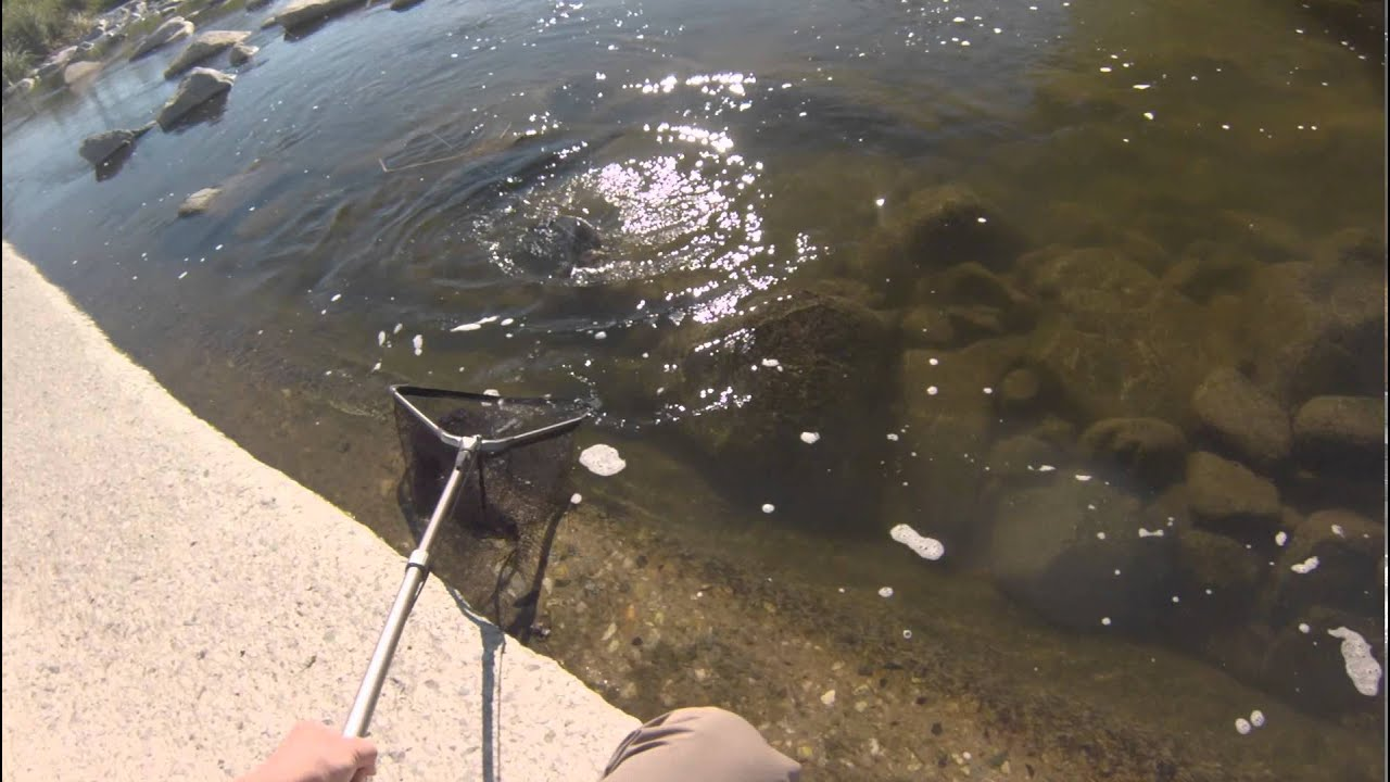 Los angeles river fishing youtube for Fishing in los angeles