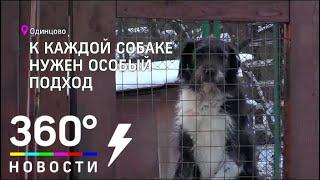 В Одинцовском приюте для животных появились необычные волонтёры