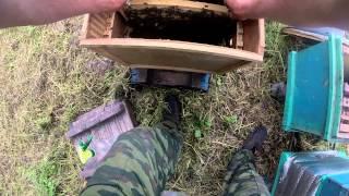 пчеловодство с чего начать №3