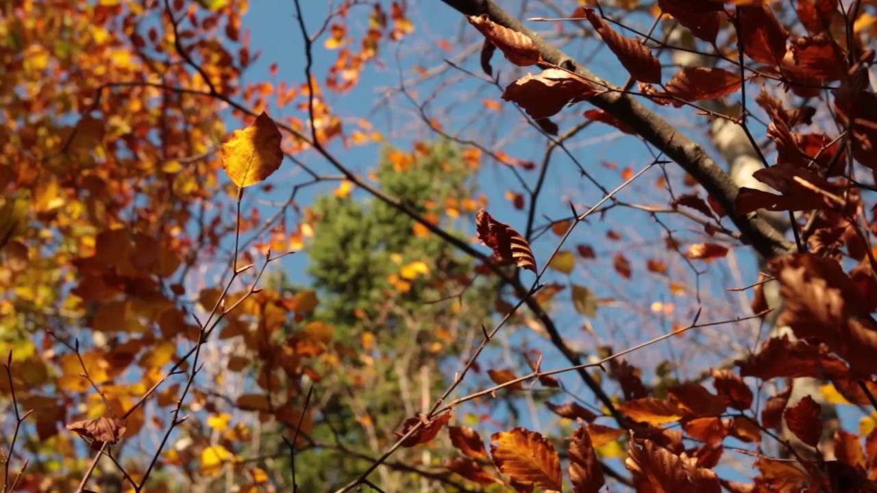 wind sounds 1 hour    wind blowing through autumn forest