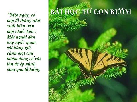 Những câu chuyện ý nghĩa về cuộc sống- Bài học con bướm