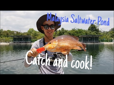 Saltwater Pond Fishing Catch And Cook! (20 Mins Away From Singapore) Malaysia, Johor Bahru