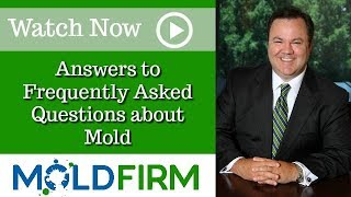 Living in a Mold Infested Space? | Atlanta Molds Attorney | Toxic Mold | Mold Firm