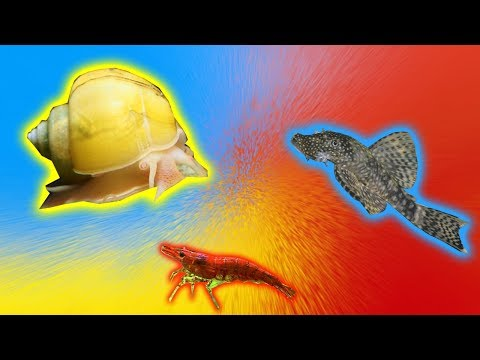 Mystery Snail, Cherry Shrimp and Bristlenose Pleco Unboxing