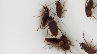 [이지 사이언스] 곤충과 해충 사이 / YTN 사이언스
