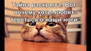 Тайна раскрыта! Вот почему коты любят тереться об наши ноги