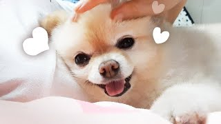 10 proofs that your dogs love you