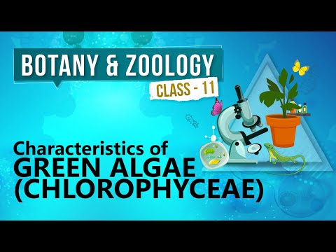Characteristics of Green Algae ( Chlorophyceae ) - Kingdom Plantae - Biology Class 11