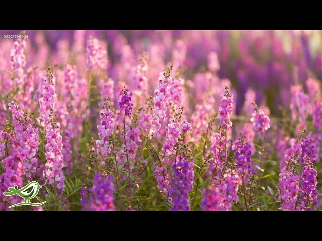 Beautiful Piano Music: Relaxing Music, Peaceful Music, Sleep Music, Romantic Music ★148