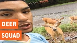 Guy Becomes Friends With Family of Deer | Squad Goals