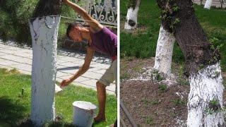 هل تعلم لماذا يتم طلاء سيقان الأشجار باللون الأبيض؟