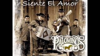 Los Palominos - Siente el amor (Estreno 2013)