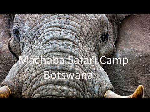 Machaba Luxury Safari Camp, Botswana
