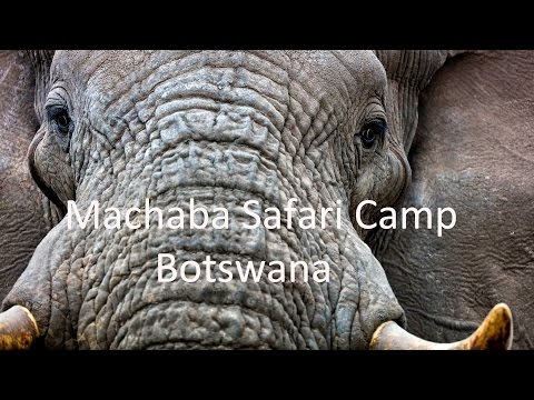 Machaba Luxury Safari Camp, Botswana