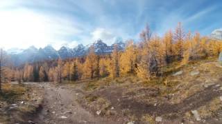 Hiking through Larch Valley thumbnail