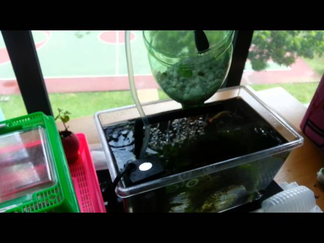 DIY mini aquaponics system (suited for shoebox apartments)