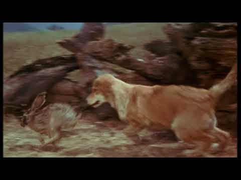 Walt Disney's Old Yeller 1957 Ending Song Young Yeller