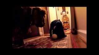 English Cocker Spaniel Puppy Apologizes