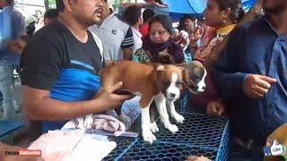 AMAZING DOG MARKET IN GALIFF STREET KOLKATA 2018