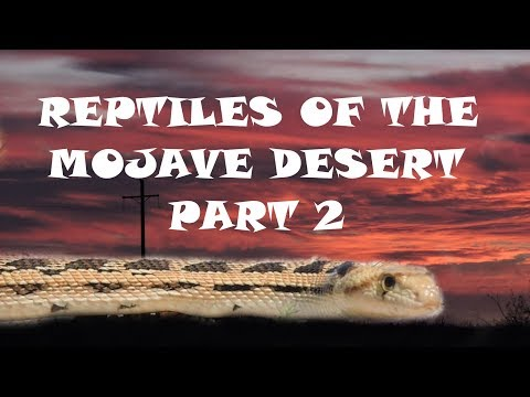 Reptiles of the Mojave Desert Part 2