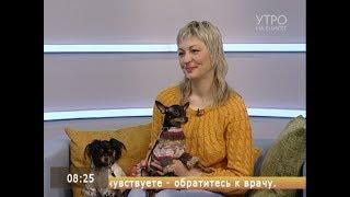Зимняя мода для собак: во что одеть четвероногого друга?