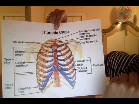 Thoracic Cage Surface Landmarks