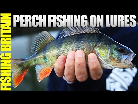 Best lures for catching perch top 10 doovi for Perch fishing lures