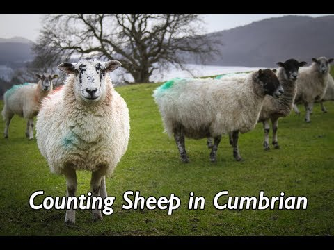 Counting Sheep in Cumbrian