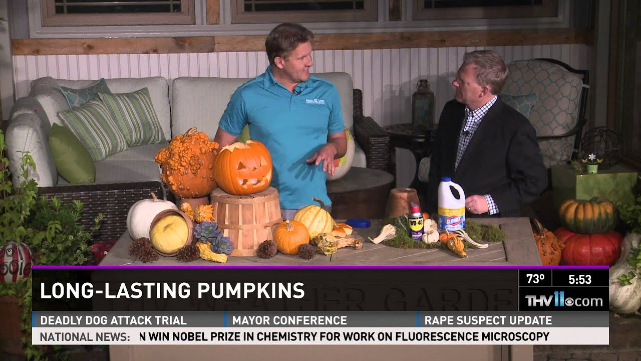 Dipping pumpkins in bleach