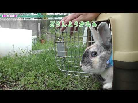 Rabbit and cat playing outside【動物ファミリーの家】うさぎとネコの外遊び