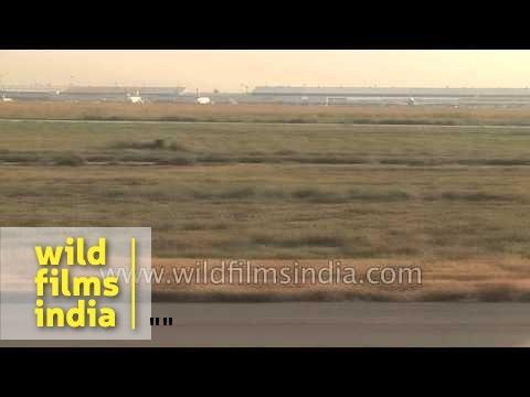 Airplane taxiing at Delhi