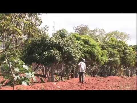 Rain runoff water harvesting