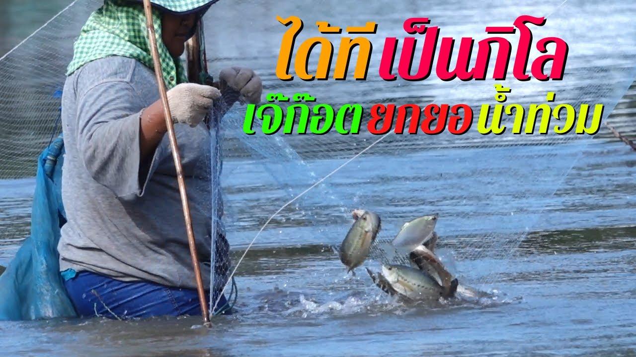 ยกยอน้ำไหลได้ทีเป็นกิโล! เจ๊ก๊อตยกยอน้ำท่วม สภ.ย่อยเมืองเก่า Nong Kot catches flooded fish.