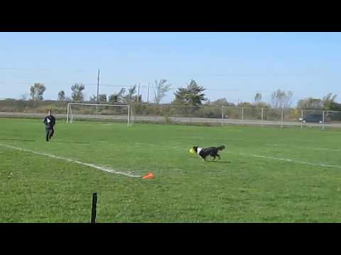 Storm the Border Collie - Maritime Disc Dog Cup 2011 - Furthest Catch