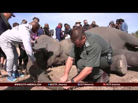 Elephant poaching reported at Kruger National Park