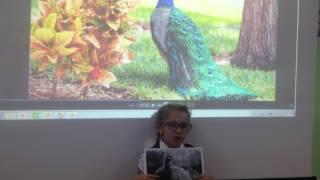 Доклад о птицах. 1 класс К