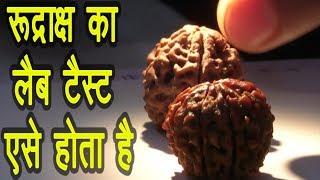 How To Test Rudraksh|Original Rudraksh Lab Test रुद्राक्ष लैब टैस्ट कैसे होता है Rudraksh Lab test