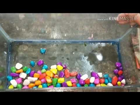 How to Clean #fish tank #aquarium #மீன் தொட்டி சுத்தம் செய்வது எப்படி????
