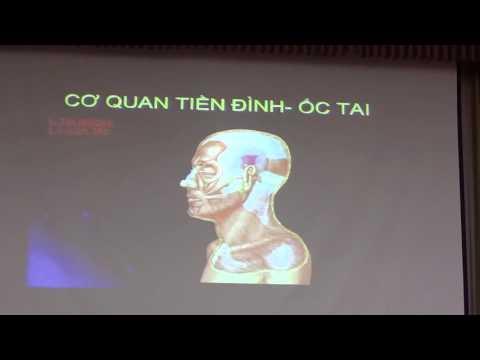 Giai phẫu Tai