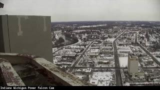 Indiana Michigan Power Falcon Cam