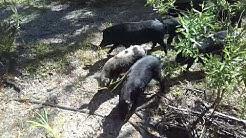 Babcock Ranch Eco Tours - Punta Gorda, Florida