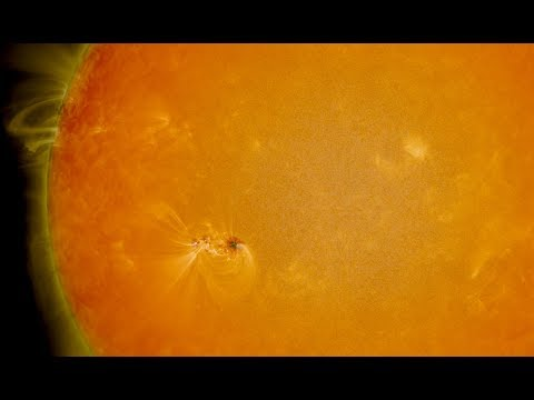 Two Weeks in the Life of a Sunspot