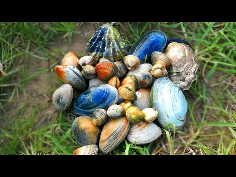 Foreshore Foraging: Clams, Eel, Crabs And More!